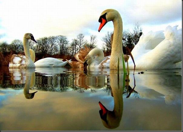 Belos exemplos de reflexões fotograticas (14)