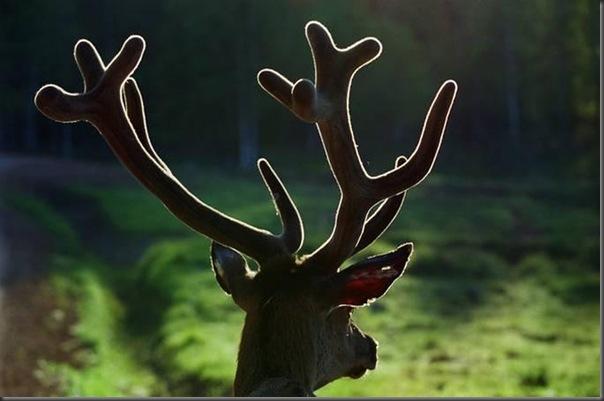 Lindas imagens de animais por Andris Eglitis (7)