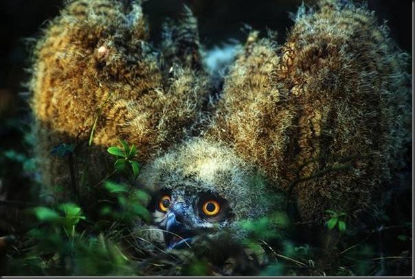 Lindas imagens de animais por Andris Eglitis (23)
