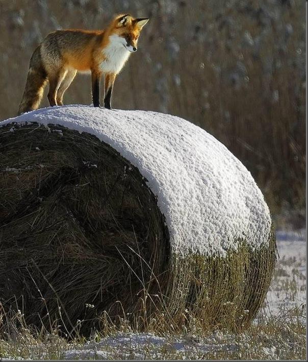 Lindas imagens de animais por Andris Eglitis (2)
