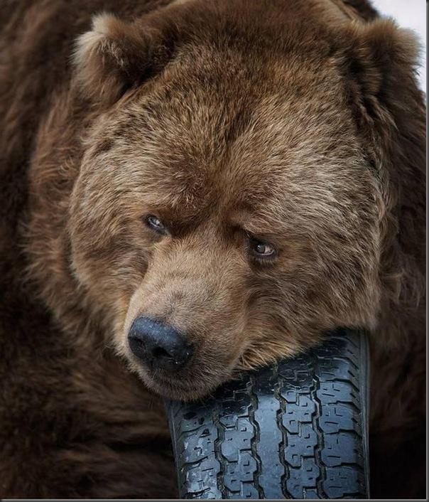 Lindas imagens de animais por Andris Eglitis