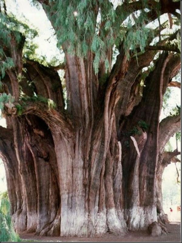Lindas árvores (13)
