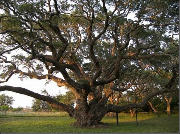 Lindas árvores (4)