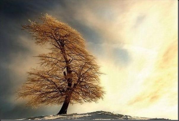 Lindas árvores (2)