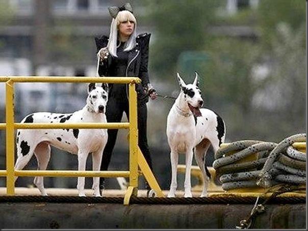 Lady Gaga dia a dia (5)