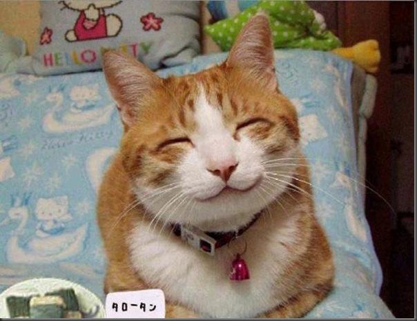 O sorriso dos animais (8)