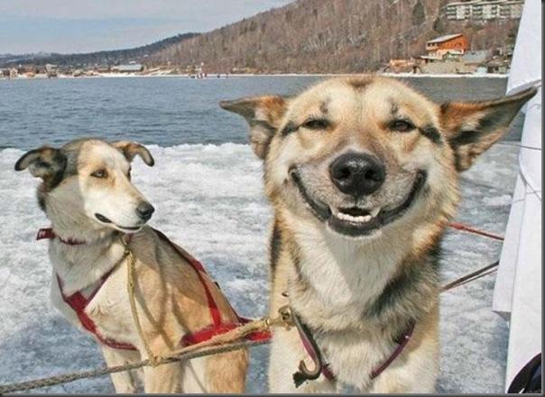 O sorriso dos animais (9)