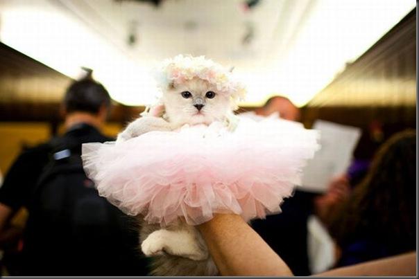 Desfile de moda de gatos (14)