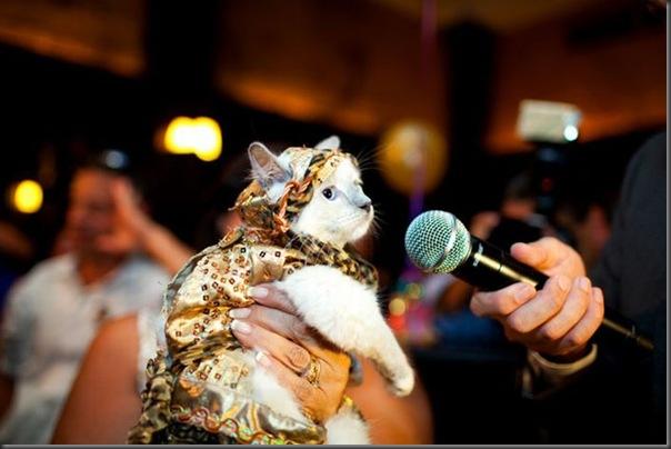 Desfile de moda de gatos (13)