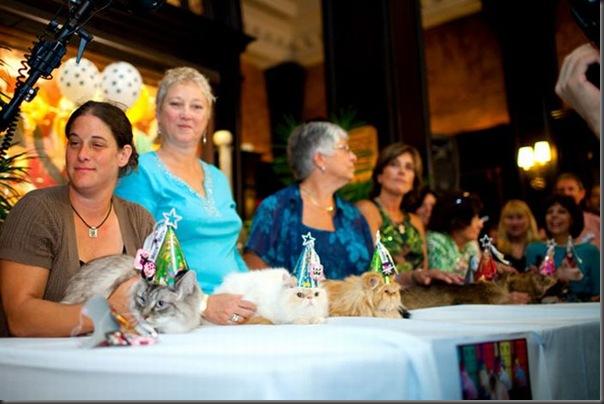 Desfile de moda de gatos (9)