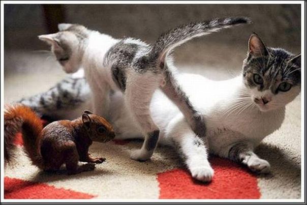 Gatos adoram um esquilo (6)