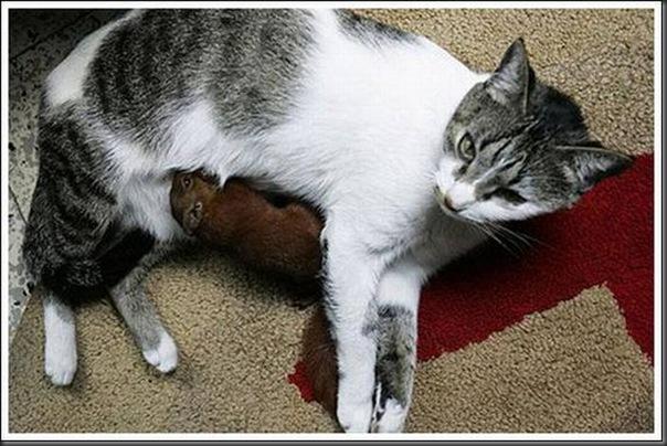 Gatos adoram um esquilo (3)