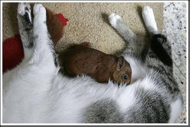Gatos adoram um esquilo (2)