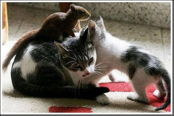 Gatos adoram um esquilo