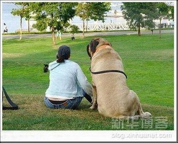 Cachorros gigantes (1)
