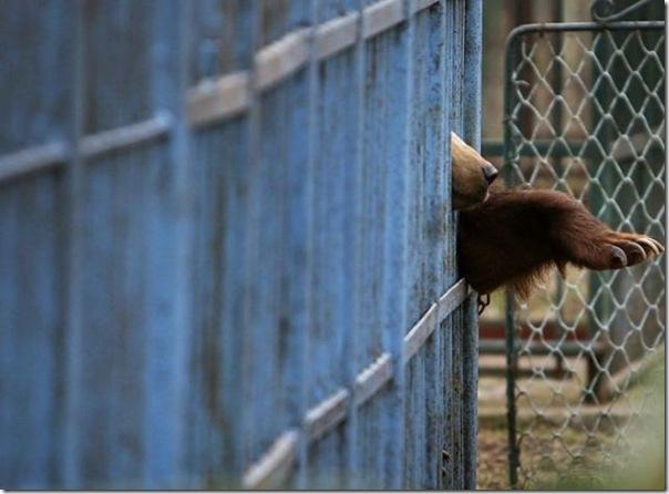 Ursinhos carinhosos (29)