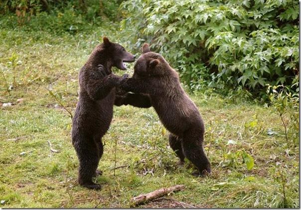 Ursinhos carinhosos (24)
