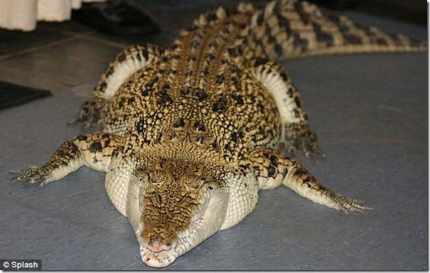 Animal de estimação perigoso (4)