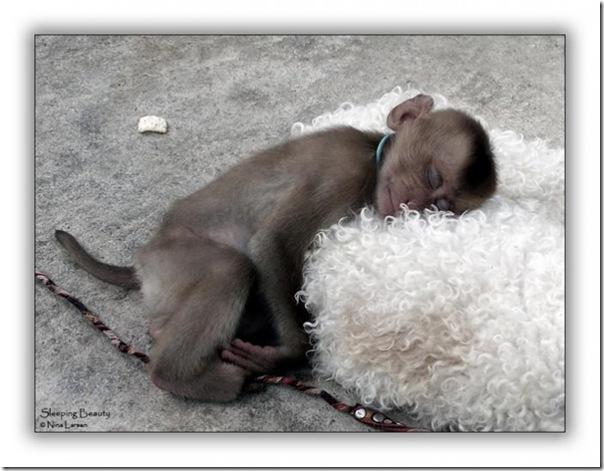 Adoráveis animais dormindo
