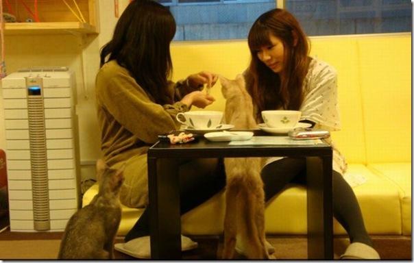 Tóquio gato café (38)