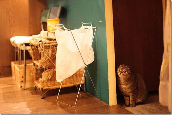 Tóquio gato café (12)
