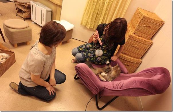 Tóquio gato café