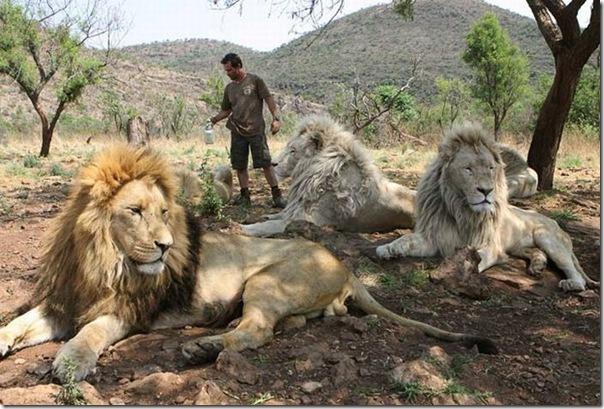 Kevin Richardson, O encantador de leões (4)