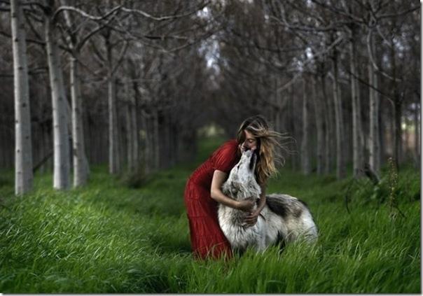 A verdade sobre a história de chapuzinho vermelho e o lobo mal 2
