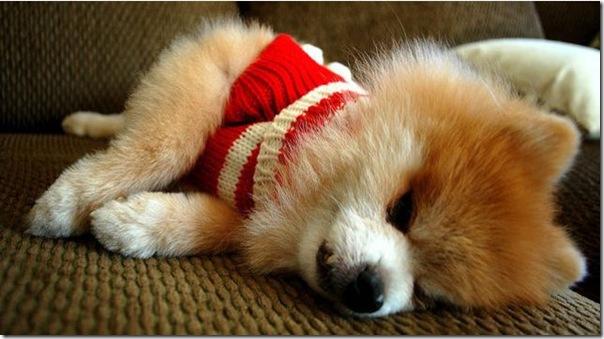 Cachorrinho mais fofo do mundo (1)