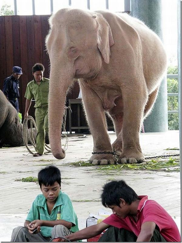 Elefante branco (3)