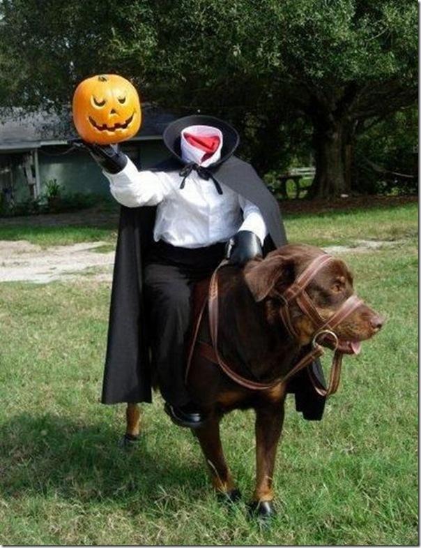Fotos engraçadas dos Halloween (13)