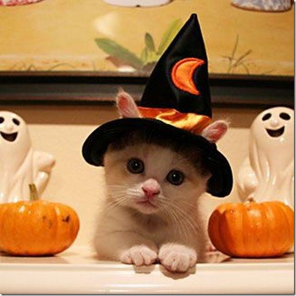 Momento oinn no Halloween