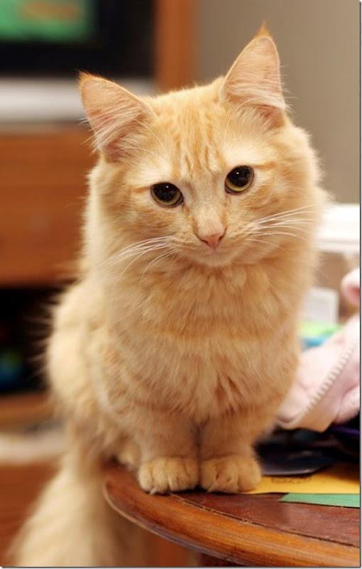 Gatinhos fofinhos (7)