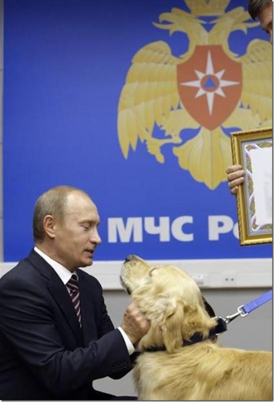 Vladimir Putin e o seu amor pelos animais (18)