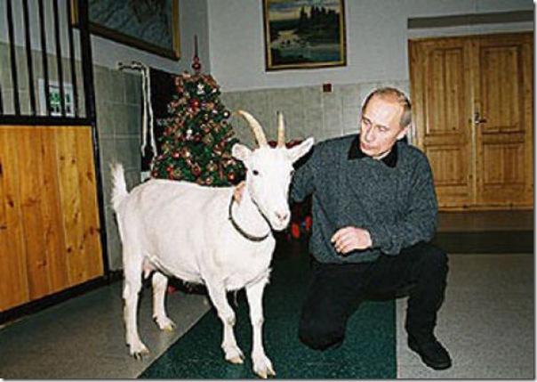 Vladimir Putin e o seu amor pelos animais (6)