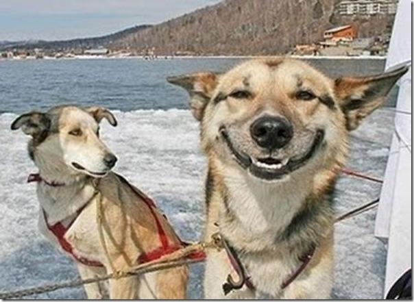 Cães drogados (2)
