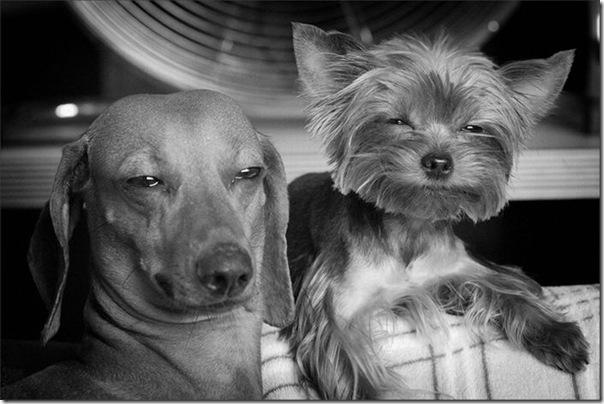 Cães drogados