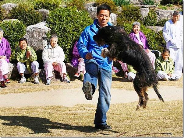cães extintos na coreia recuperação