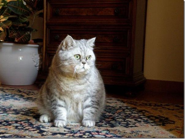 Giuly a gata gorda que ficou famoso na internet (14)