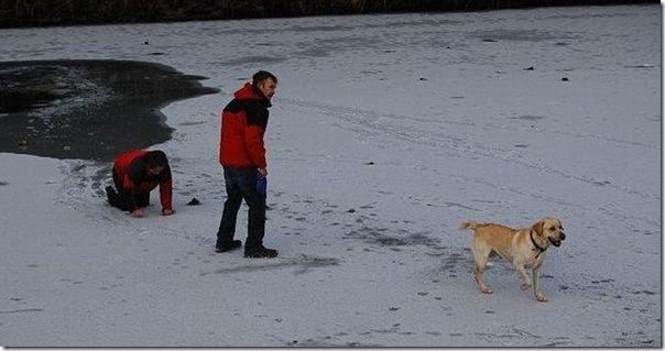 Um mulher quase morreu tentando salvar seu cão (3)