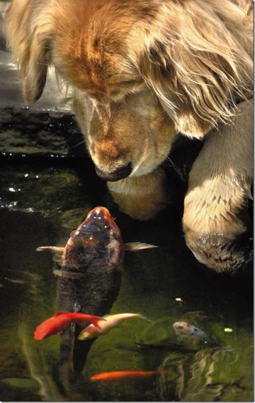 o peixe e o cão