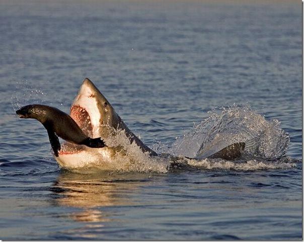 As melhores fotos de animais de 2010 (27)