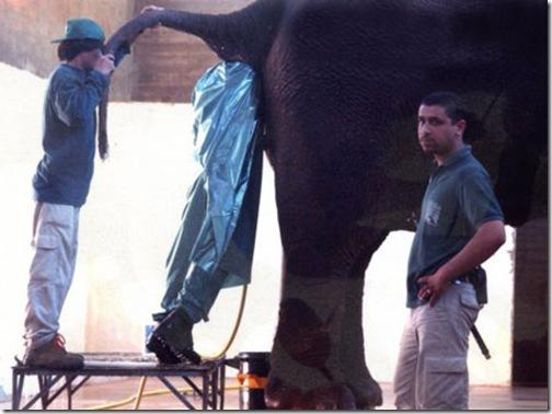 trabalho com elefantes
