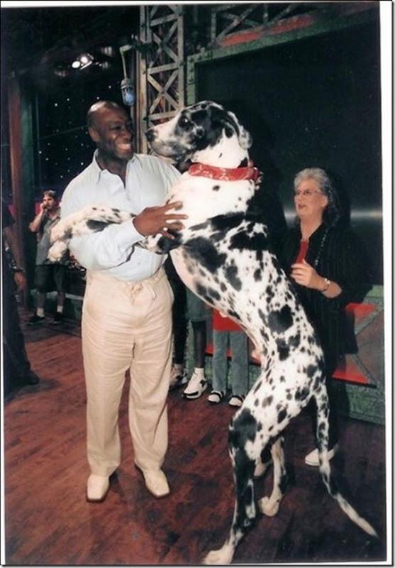 Cães gigantes (8)