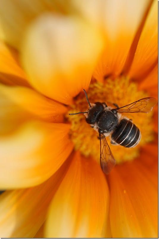 O Pequeno mundo da natureza por Louise Docker (5)