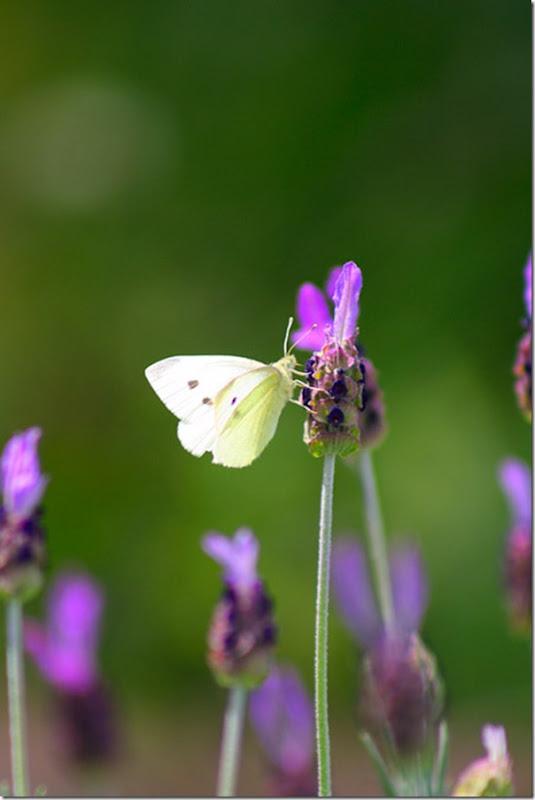 O Pequeno mundo da natureza por Louise Docker (4)