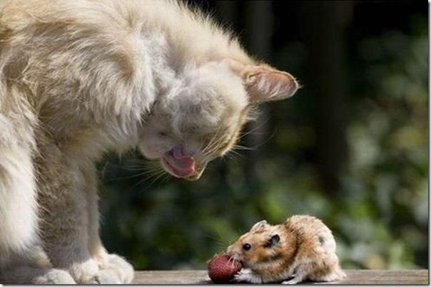 Gato e rato frente a frente