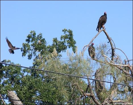 VultureTree