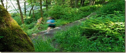 rainforest-trail-running-0023