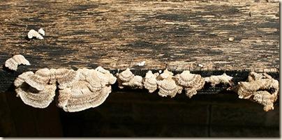 2009-08-02_mushrooms_2803 sm